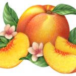 One whole peach with three cut peach slices, two peach flower blossoms and leaves.