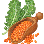 Lentil soup ingredients with kale and a wooden scoop filled with dried orange lentils.