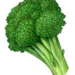 Crown of broccoli.