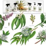 Illustrations of peppermint, eucalyptus, lemon scented myrtle, kunzea ambigua and orange blossoms.