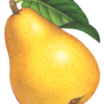 Whole Bartlett pear with a leaf.