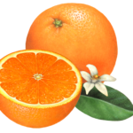 One whole orange and a cut half with an orange flower and leaf. lf