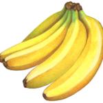 Bunch of five bananas.