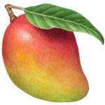 Whole mango with a leaf.