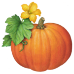 One whole pumpkin with its yellow flower and leaves.