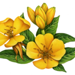 Evening primrose with two flowers and five buds.
