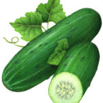 A whole cucumber and a cut half cucumber with leaves.