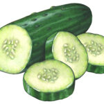 Illustration of a cut cucumber half with three slices.