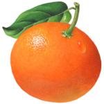 Mandarin tangerine with a leaf.