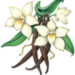 Vanilla plant with three vanilla orchids and four vanilla beans.